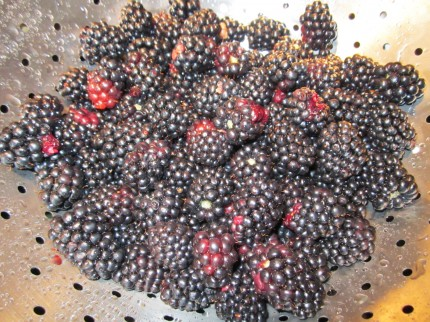 Picked-Blackberries
